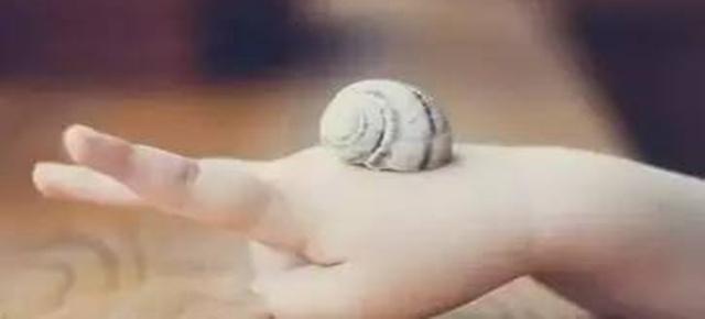 乐学 | 别让孩子成为一只流泪的蜗牛