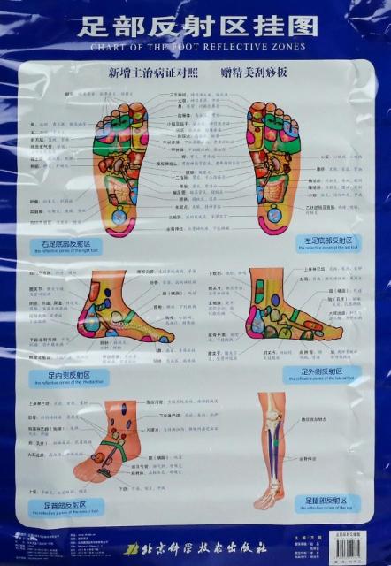 足部反射區掛圖(附刮痧板)