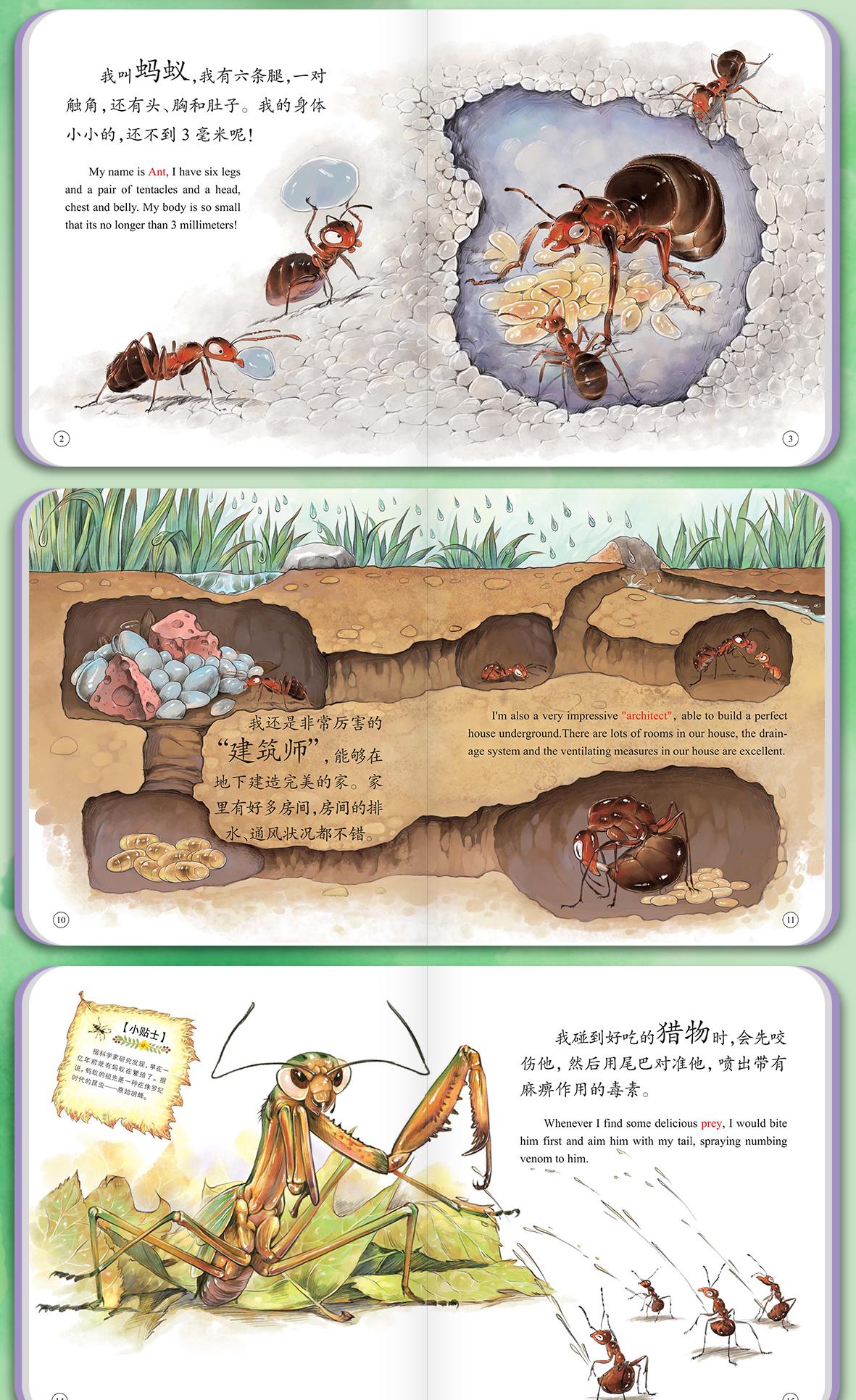 昆虫详情_13.jpg