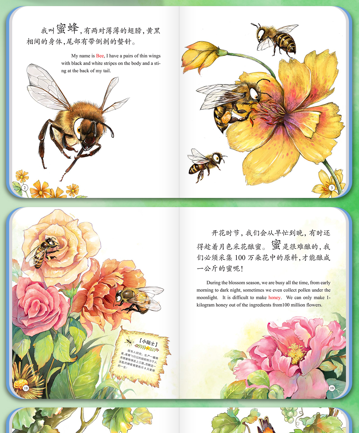 昆虫详情_08.jpg